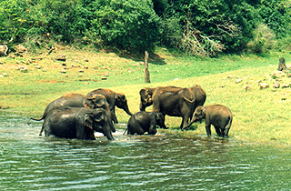 Kerala tour operator,kerala travel,tour packages in Kerala,south India tour taxi service Chennai,Kerala tour,travel agence in kerala.